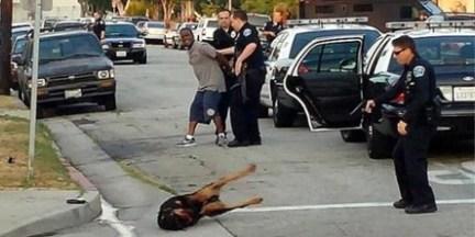 police-shoot-dog