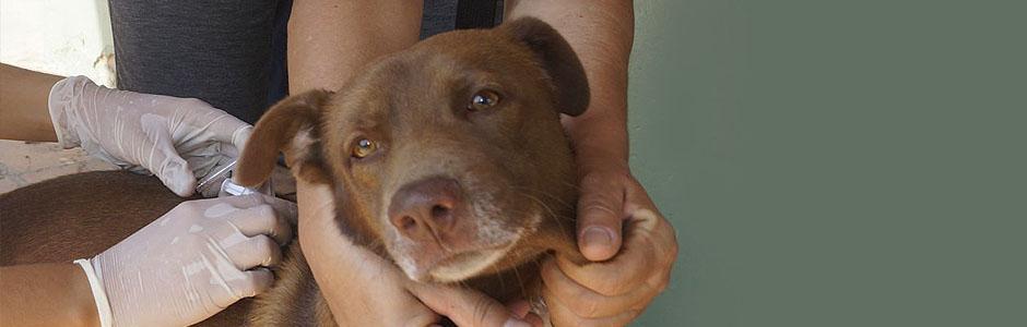 Salud-Animal-de-Perros-y-Gatos_k94uhe