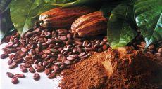 hasil pertanian indonesia