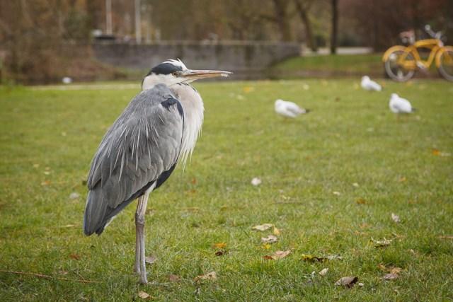 Серьезная птица, Амстердам 2012
