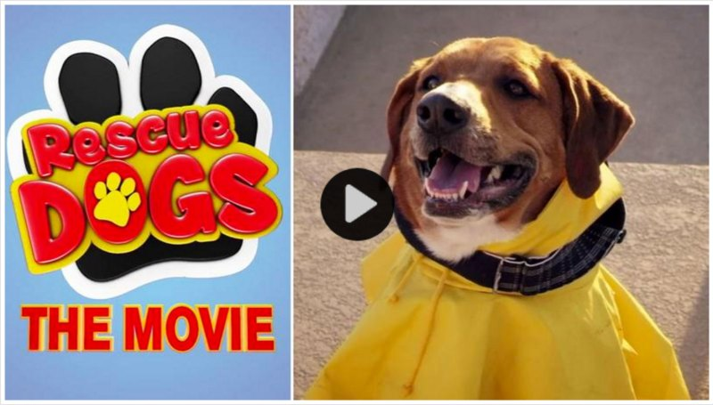 Large Of Dog Rescue Videos