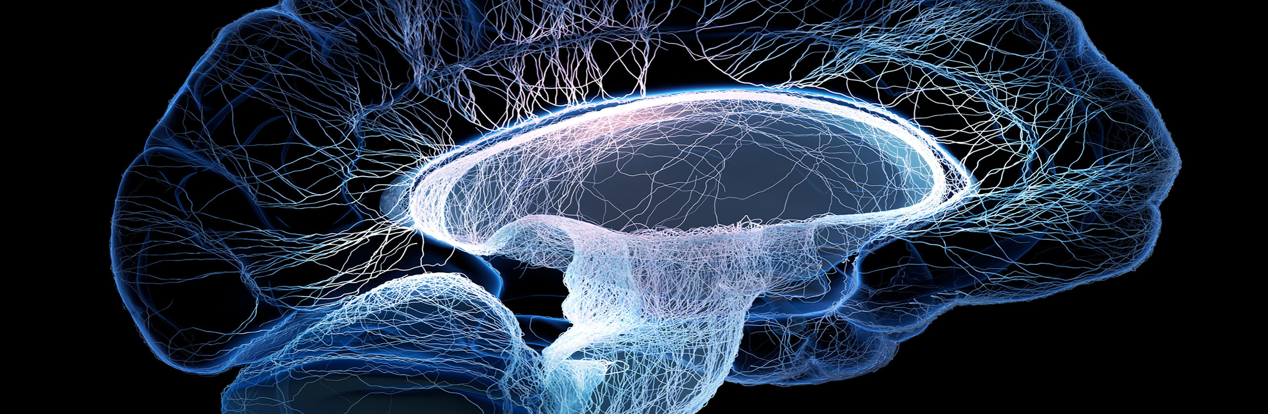 Human brain illustrated with interconnected small nerves