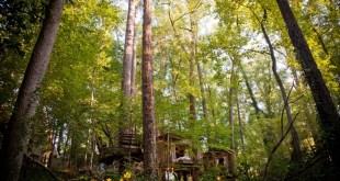 Orman İçinde Muhteşem Antik Muhteşem Ağaç Ev (1)