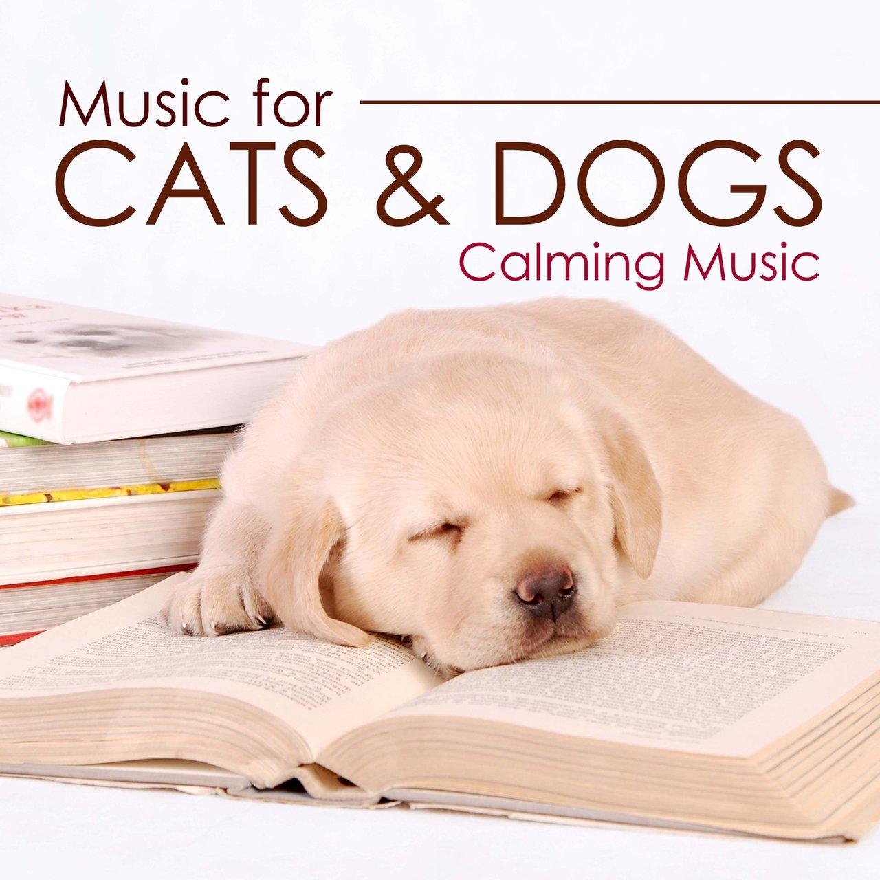 Fullsize Of Dog Calming Music