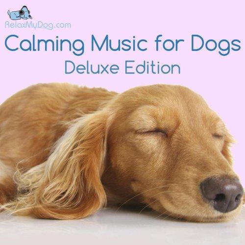 Medium Crop Of Calming Music For Dogs