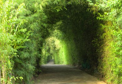 Green Garden Tunnel