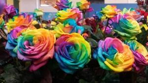 Keukenhof colorful