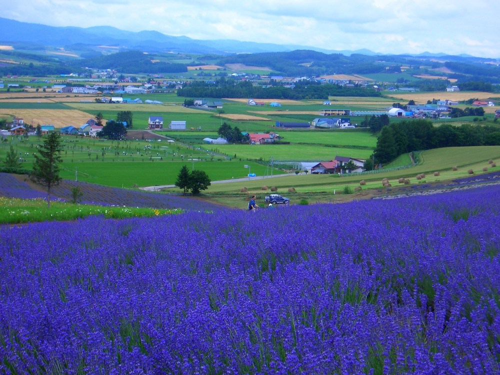 The Rainbow of Flowers in Biei and Furano, Japan (1/6)