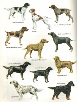 Small Of Ancient Dog Breeds