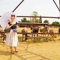 [:de]Reisetipp für den Kroatien-Urlaub: Die Eselfarm Dar Mar in Poljica Brig[:en]Travelling: The Donkey Ranch Dar Mar in Poljica Brig[:]