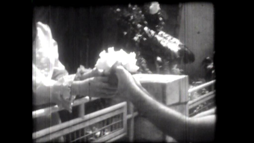 """""""Rosae Rosa"""" (1968)"""