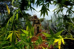 Operativo militar en la sierra.