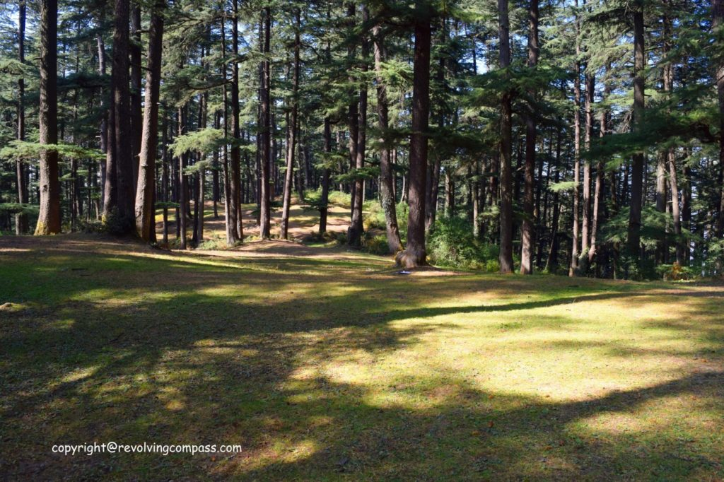 A trek at Naldehra , Shimla