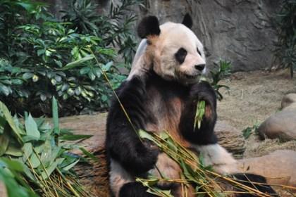 Panda40update