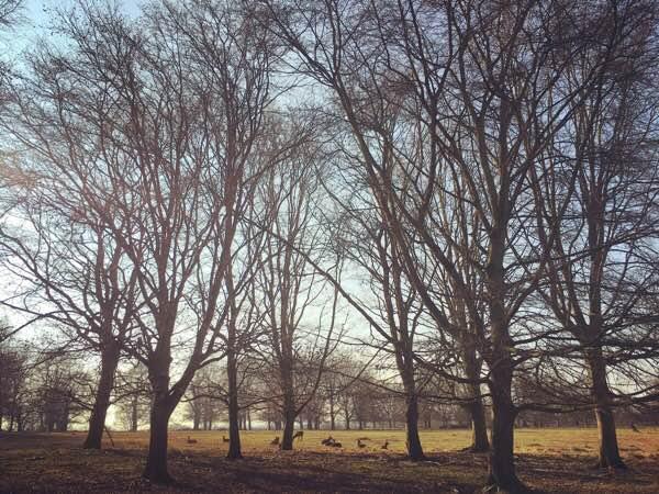 Richmond Park: Europe's Biggest Urban Park