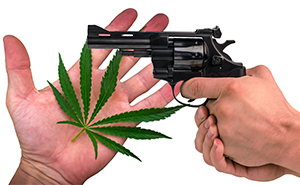 Using Marijuana to Legally Disarm Californians