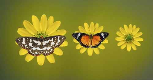 The Butterfly Effect Paying it forward 2 you