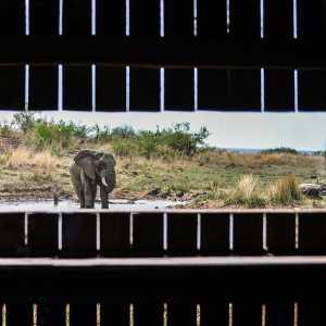 Pilanesberg DSC_0293-lr