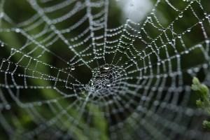 spider-web-piege-toile-araignee