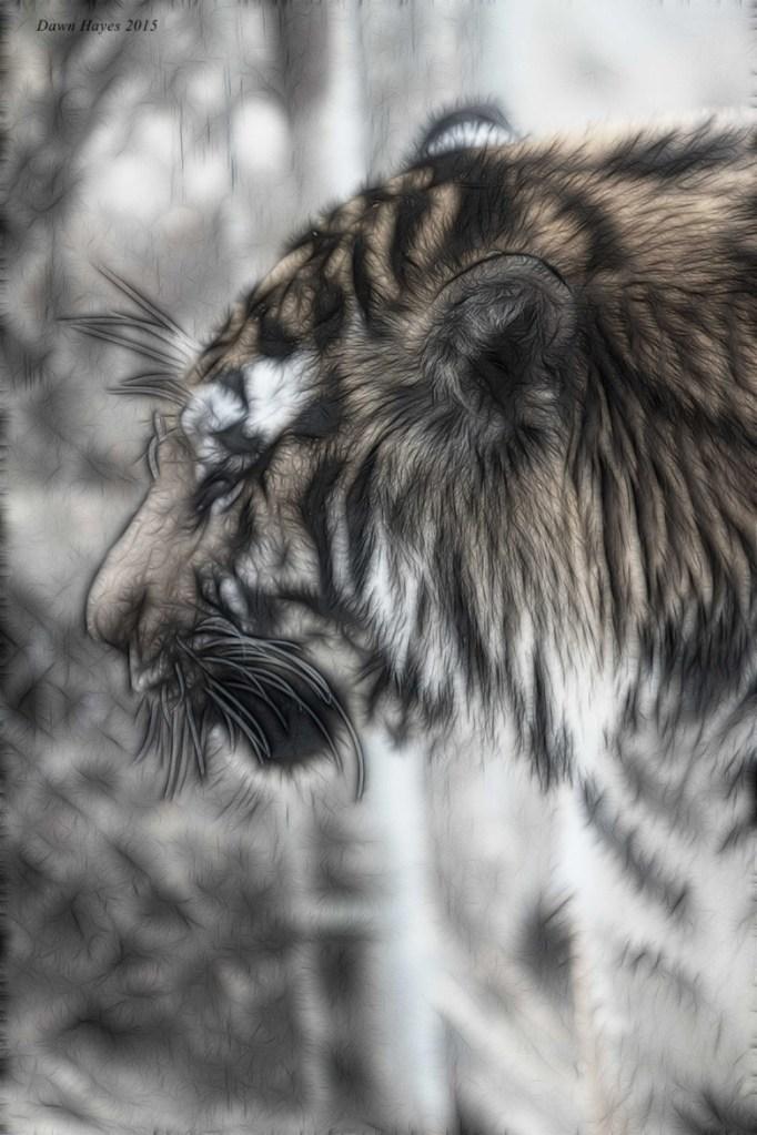 tigerweb.jpg