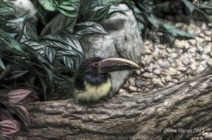 birdbeakweb.jpg