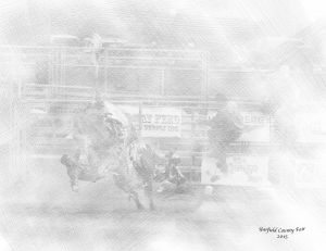 bull4sketch-web.jpg