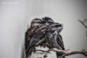 birdsweb-300x199.jpg
