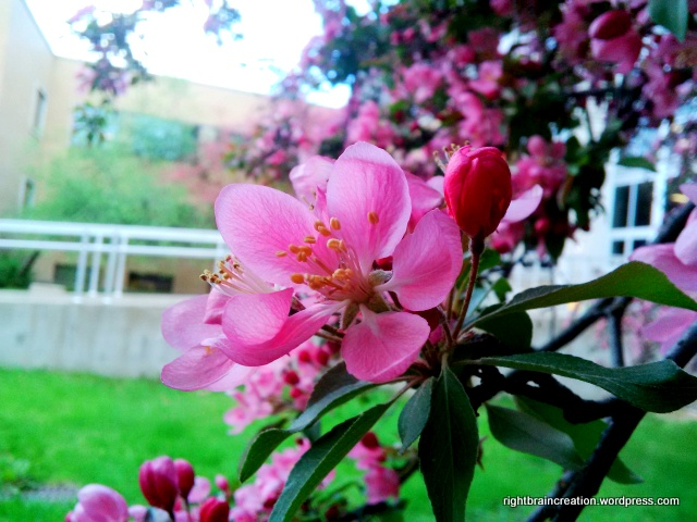 Spring Flowers: Lilacs and Apple Blossoms