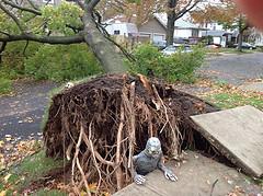 After Superstorm Sandy