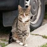 猫と自動車