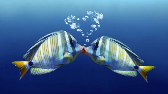 san-valentino-ristorante-pesce-la-conchiglia-doro-pineto