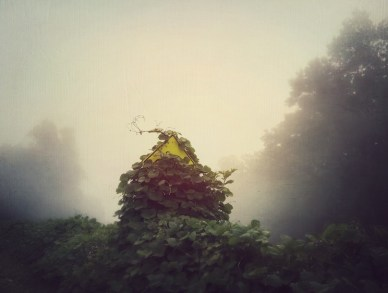 clearing-ivy-2