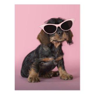 Dachshund puppy wearing sunglasses postcards