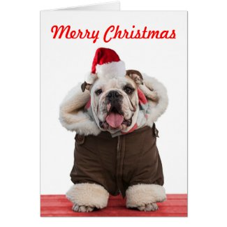 Funny and cute Bulldog Christmas cards