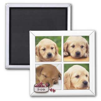 instagram dog photo magnets