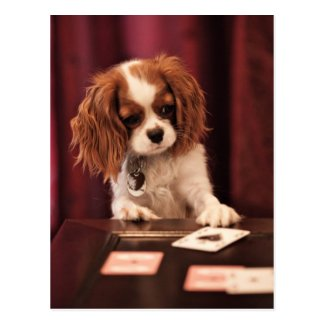 Puppy plays with cards on coffee table. post cards