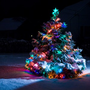 snowy-christmas-tree