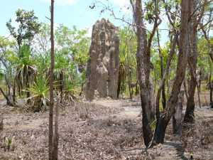 Massive Cathedral Termite Mound, Litchfield.