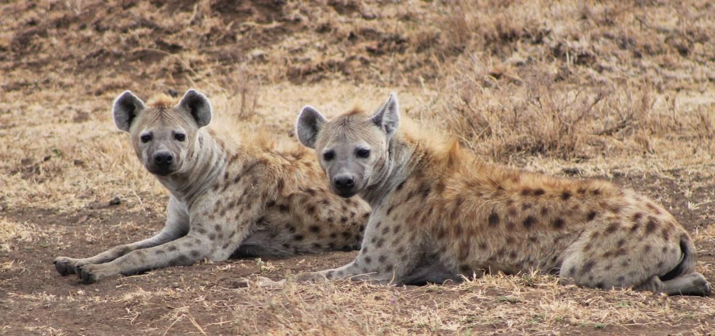 Gift of Life - Journey Through The Ngorongoro Crater