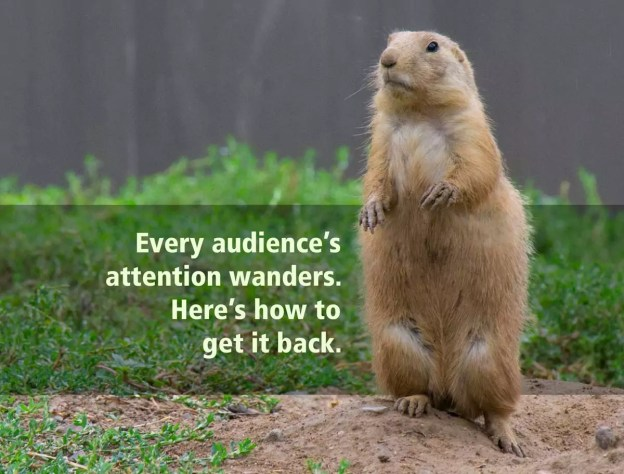 A prairie dog paying very close attention indeed