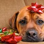 Christmas Puppy?