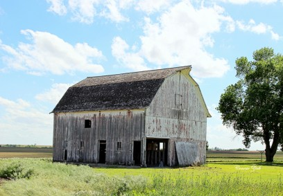 """Old Barn""Shannon 1"