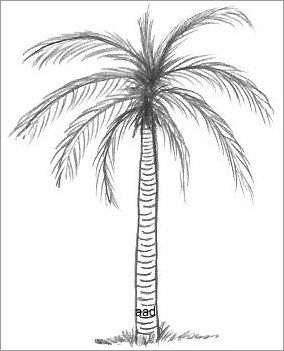 how to make a palm tree drawing