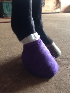 Wrapped hoof abscess