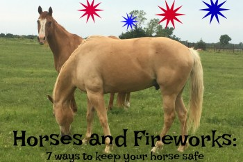 Horses and Fireworks Don't Mix