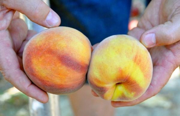 Ripe Vs. Unripe Peach