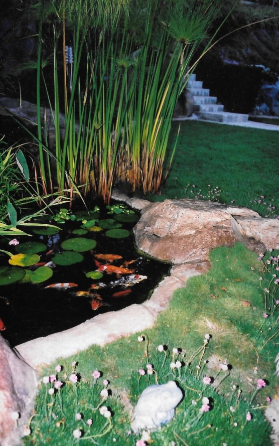 swimming pools fish ponds (38)