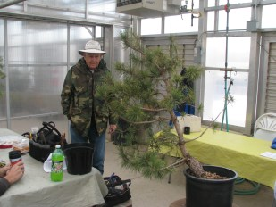 Darrel analysing a Pinus Contorta