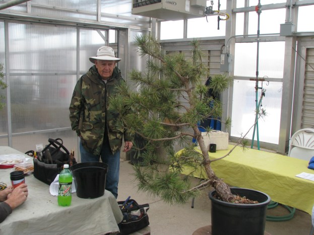 Darrel analysing a Pinus Contorta