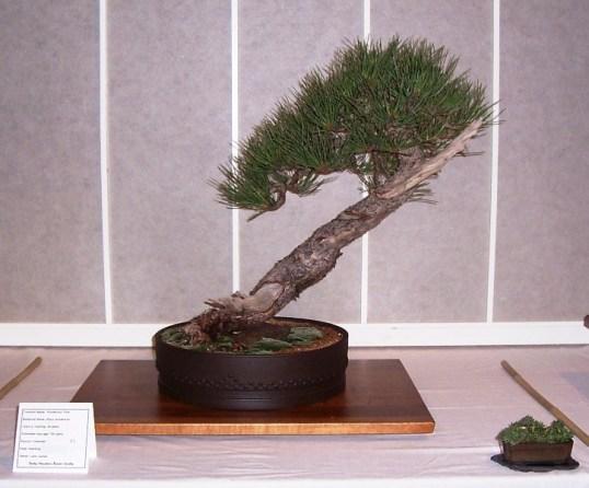 RMBS Member Trees